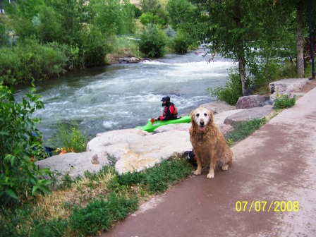 Golden Retriever by Creek